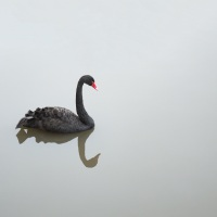Black Swans Can Inspire A New Era of Innovation